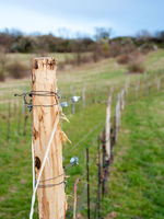 Wire at a vineyard in Burgenland