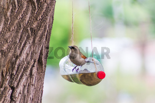 feeders and drinkers for birds made with recycled plastic bottles