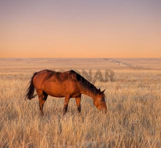 Horse grazing in evening pasture