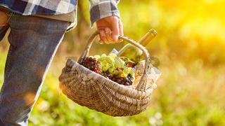 Korb mit Wein und Weintrauben für Weinprobe
