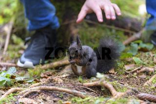 Tourist feeds squirrel