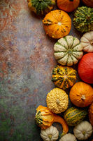 Different kinds colorful mini pumpkins placed on rusty background