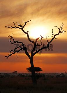 Morgens im Kruger Nationalpark Südafrika; morning at Kruger national park, south africa