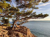 Pensive woman on vacations, sitting and relaxing under large pine tree on bench by dip blue sea enjoying beautiful sunset light in Brela, Makarska region, Dalmatia, Croatia