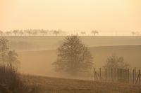 Spring foggy and misty sunrise landscape