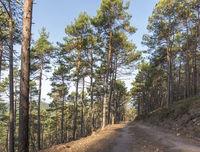 Ausblick über ein Bewaldetes Tal mit Kiefern und Laubbäumen im Herbst