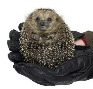 holding a hedgehog