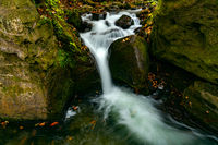 Oirase Mountain Stream flow passing green mossy rocks covered with colorful falling leaves