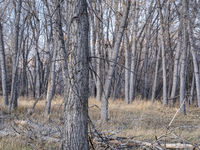 Riparian forest along the Poudre River