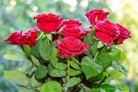 Beautiful bouquet of red roses for birthday