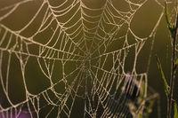 Spinnenetz im Gegenlicht, Spiders Web Backlighting