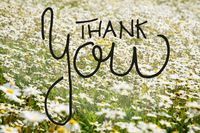 Sunny White Daisy Flower Meadow, Calligraphy Thank You