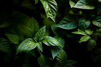 Abstract green leaves texture, nature background, dark tone wallpaper. Natural green leaves pattern with moody feel.