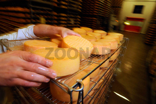 cheese ripening in industrial food production