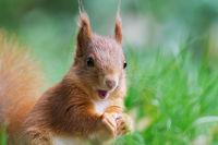 ein Eichhörnchen staunt und freut sich