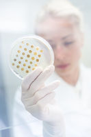 Scientist growing bacteria in petri dishes on agar gel as a part of scientific experiment.