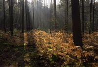 Forest on the Schovenhorst estate