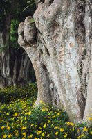 Tree trunk and yellow flowers in Nepal