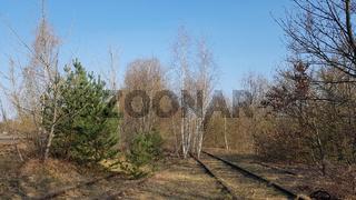 Stillgelegte Gleise sind von Bäumen überwachsen