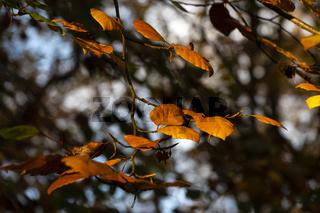 Blätter an einem Baum im Herbst