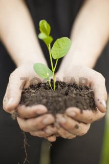 Hands holding seedleng