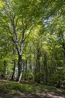 Ruegen Wald Jasmund