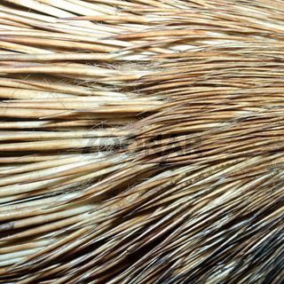 detail of real  crested porcupine fur ( hystyrix cristata )