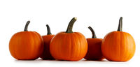 Pumpkins in a row isolated on white