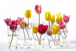 Tulips in glasses