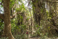 Dense rainforest with a small path,