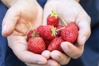Reife Erdbeeren in weiblichen Händen