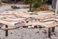 Drying fish in the sun, Madagascar.
