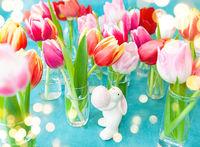Frische bunte Tulpen