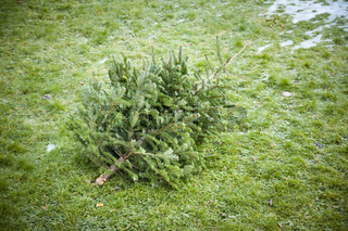 used christmas tree