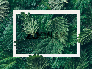 nettle leaves pattern with frame