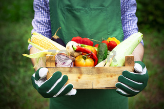 Farmer holding crate with ripe harvest in garden