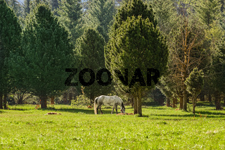 Horse near forest