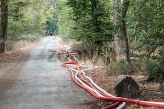 Löscharbeiten der Feuerwehr bei einem Waldbrand