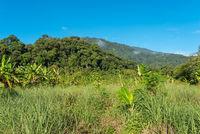 Landschaft in Ketambe im Süden des Gunung Leuser Nationalparks auf der Insel Sumatra