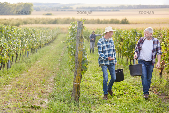 Zwei Erntehelfer sprechen über die Weinlese