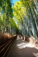 Arashiyama Bamboo Forest in Southern Kyoto Japan