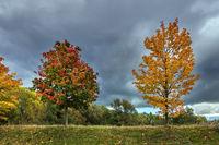 Blick auf herbstlich gefärbte Bäume in der Hansestadt Rostock