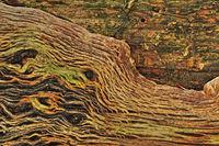 Holzstruktur auf einem alten Baumstamm