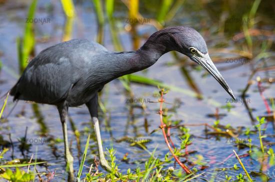 Heron in Florida