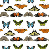 seamless pattern with butterflies on white background.
