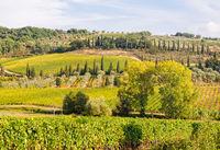 Tuscan countryside - Montalcino