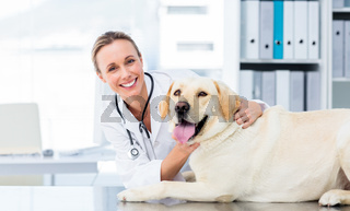 Female veterinarian examining dog