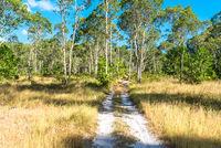 Feldweg im Nationalpark der Insel Ko Lanta Noi