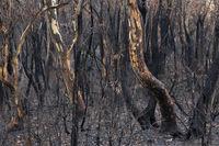 Australian bush fires burnt landscape of trees