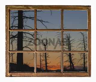 sunset silhouette of burnt pine forest - window view
